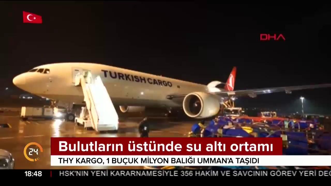 Tam 100 ton canlı balık uçakla Umman'a taşındı
