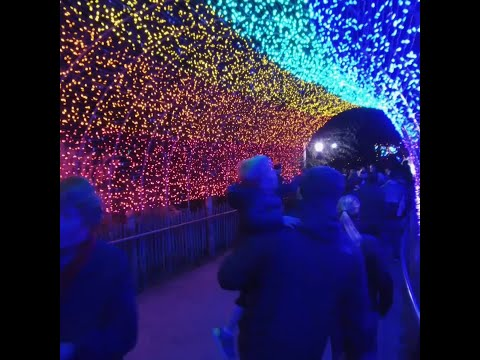 Cincinnati's Festival of Lights begins this weekend