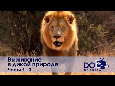 Выживание в дикой природе - Часть 1-3 - Документальный фильм - Сборник - Видео онлайн