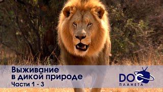Выживание в дикой природе - Часть 1-3 - Документальный фильм - Сборник
