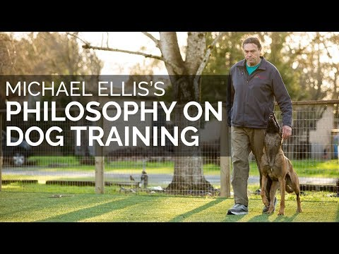 Michael Ellis' Philosophy of Dog Training