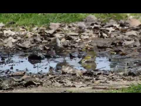 Public baths for birds   12   3   2018    Greece