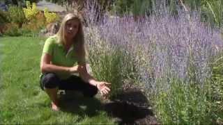 7 Principles of Xeriscape Gardening