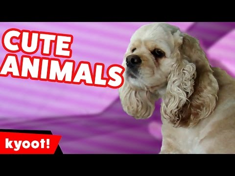 Funniest Pet & Animal Bloopers, Outtrakes & Clips of 2016 Weekly Compilation | Kyoot Animals