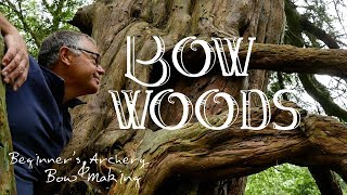 Bow Woods. How I Identify Trees for my Longbows. Harvesting Elm for Bow Staves