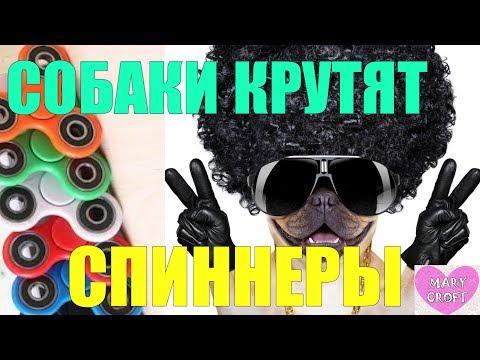 СМЕШНЫЕ СОБАКИ КРУТЯТ СПИННЕРЫ / Funny Spinner Dog / Трюки со спиннерами