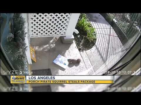 Anjali Queen B - Squirrel Caught on Video Stealing Package Outside Apartment