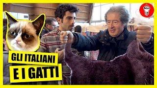 Gli Italiani e i Gatti - TELO MARE TELO CHIEDO - theShow