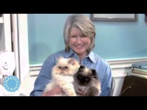 Why Cats Make A Happy Home - Martha Stewart