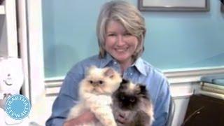 Why Cats Make A Happy Home - Martha Stewart