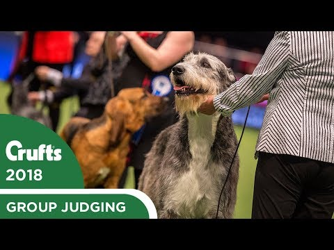 Vulnerable Breeds Competition | Crufts 2018