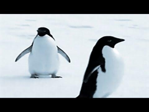 Music by CUSCO - Penguin Dance