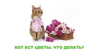 Кот ест цветы  Что делать. Ветеринарная клиника Био-Вет.