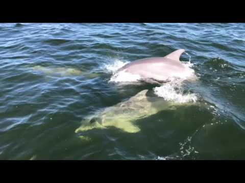 Jet ski dolphin Tours in Tampa bay