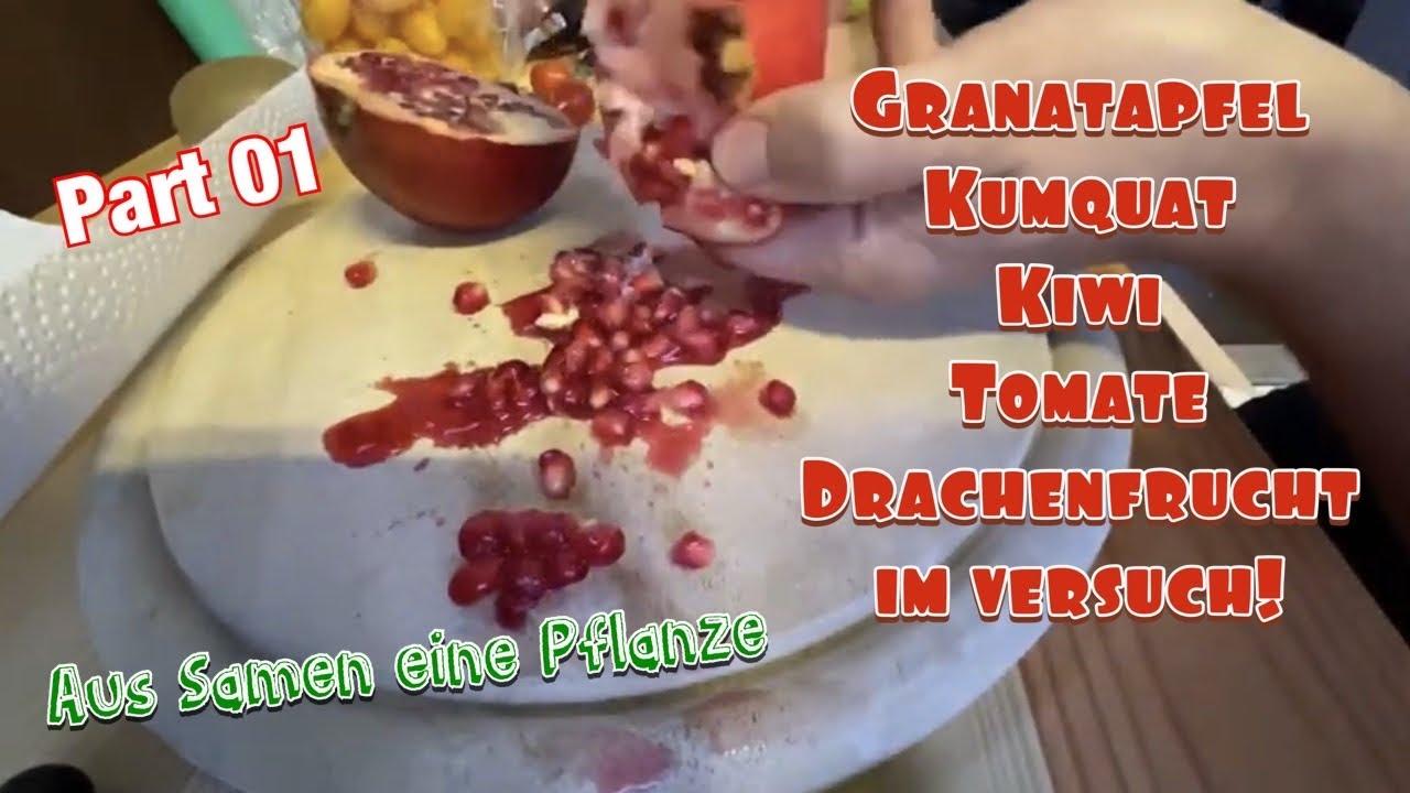 Kerne zum keimen bekommen aus Früchten!Tomaten,Kumquat,Drachenfrucht,Kiwi,Granatapfel und Pfirsich