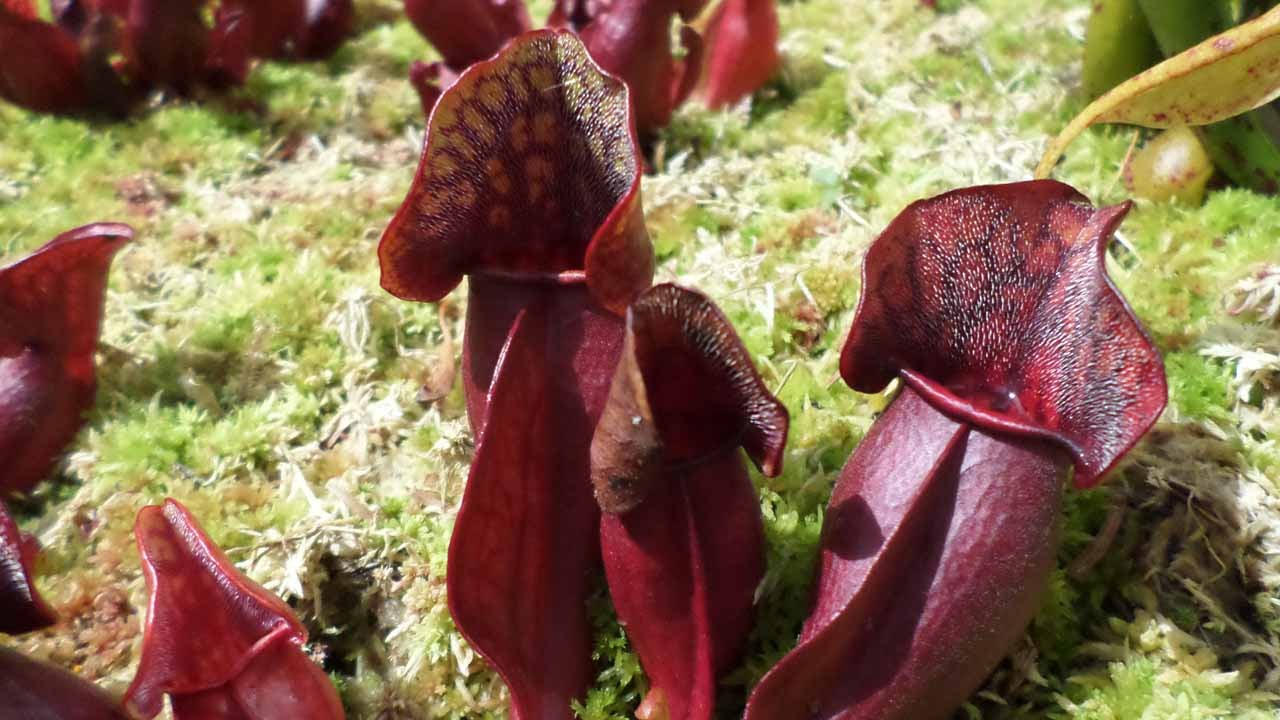 The Carnivorous Collection