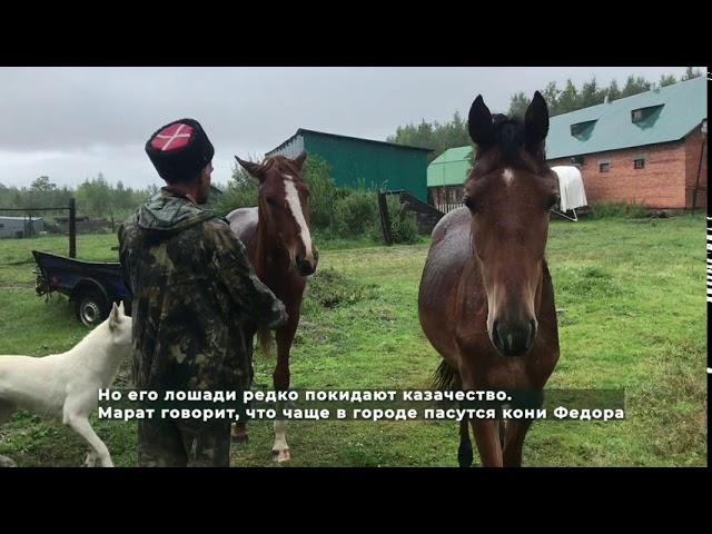 Чьи лошади пасутся на детской площадке?
