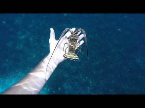 Chasse sous marine Martinique 11
