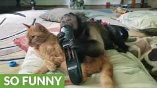 ちょっとチャンネル変えていい?次は何を見ようかな。仲良くテレビを見る猫とサル