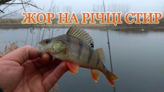 Жор на річці Стир. Попав на активного окуня в місті Берестечко