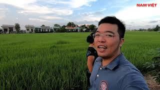 Rural life in Vietnam, 11th aunt harvested vegetables