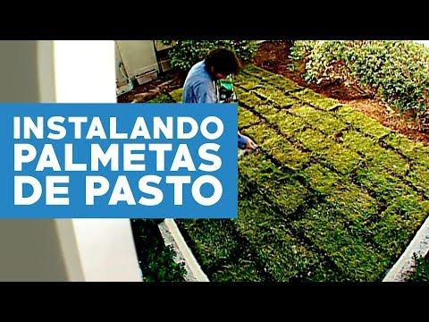 C mo instalar palmetas de pasto youtube for Tipos de cesped natural para jardin