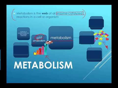 Metabolism Intro (2016) IB Biology