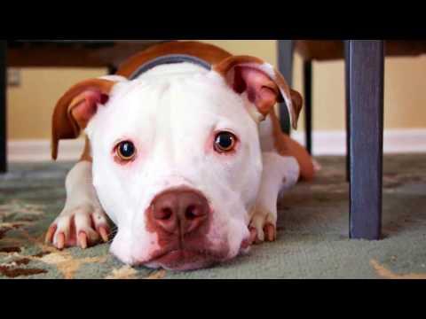 100 Cute Dogs slideshow (HD)