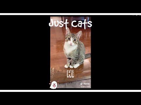just cats being adorable | tik tok kats