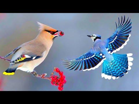 সবথেকে সুন্দর ১০টি পাখি   Top 10 Most Stunningly Beautiful Birds In The World   Amazing Birds