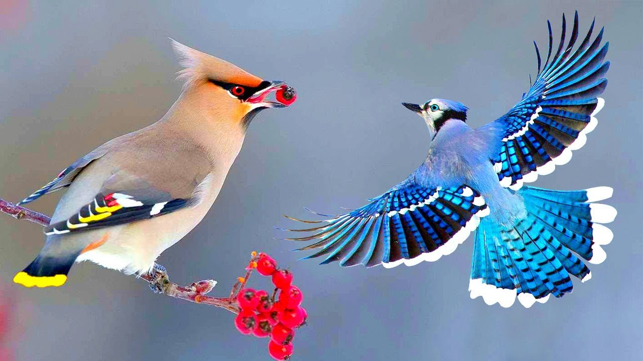 সবথেকে সুন্দর ১০টি পাখি | Top 10 Most Stunningly Beautiful Birds in the World | Amazing Birds
