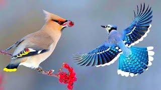 সবথেকে সুন্দর ১০টি পাখি | Top 10 Most Stunningly Beautiful Birds in the World | Amazing Birds