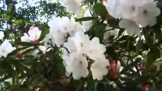 Bangla Vatiali Song Ujan Ganger Maji Vai Re Bangladeshi Region