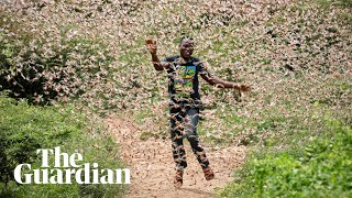 Fighting a locust plague amid Covid-19 in east Africa