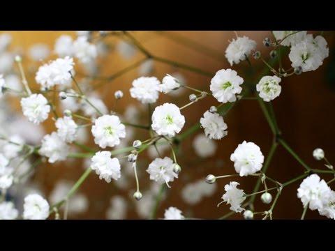 Продажа цветочных