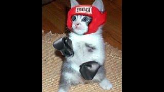 Бои без правил!! Кошачий бокс,смотреть до конца! / cat box / 猫
