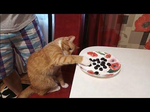 Кошка, которая очень любит маслины