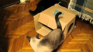 Жилищные войны котов.