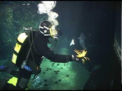 Scuba Diving at Montreal Biodôme.dv