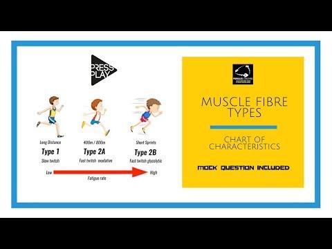 Muscle Fibre Types Chart of Characteristics
