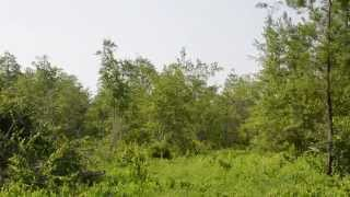 Land Site Preparation For Reforestation, Farming or Pasture Land