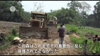 絶滅寸前の西アフリカ霊長類を守る〜コートジボワール