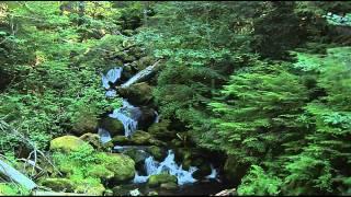Божественный дудук (Дживан Гаспарян-1)