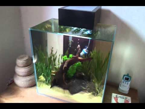 Fluval Edge 2 Planted Equarium 12 Gallon Youtube