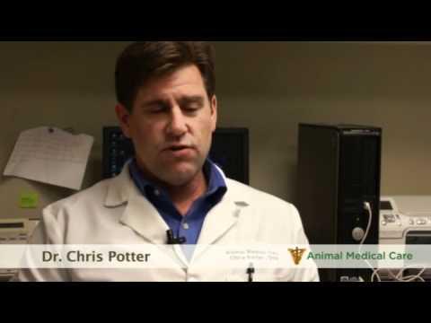 Dr. Chris Potter - How Often Should You Bathe Your Pet?
