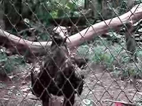 costa rica zoo