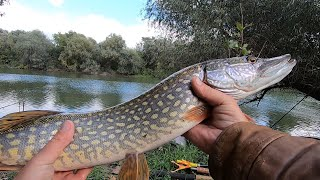 РЕКА ДНЕСТР октябрьская рыбалка