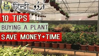 buying a plant