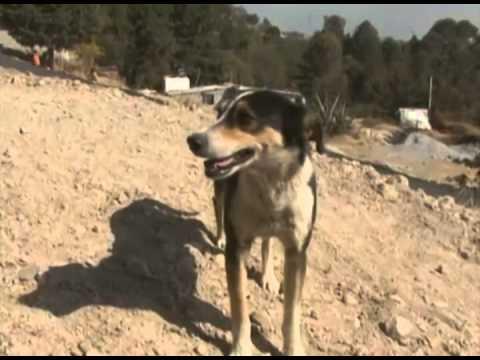 Domingo de Playa Canina. Santa Pola. from YouTube · Duration:  3 minutes 7 seconds