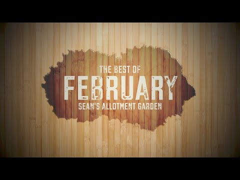 What to do in the kitchen garden (allotment) in February